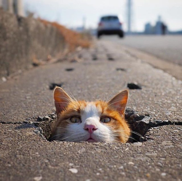 pot hole cat