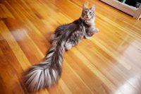 Such a tail Its not mine but i wish it was