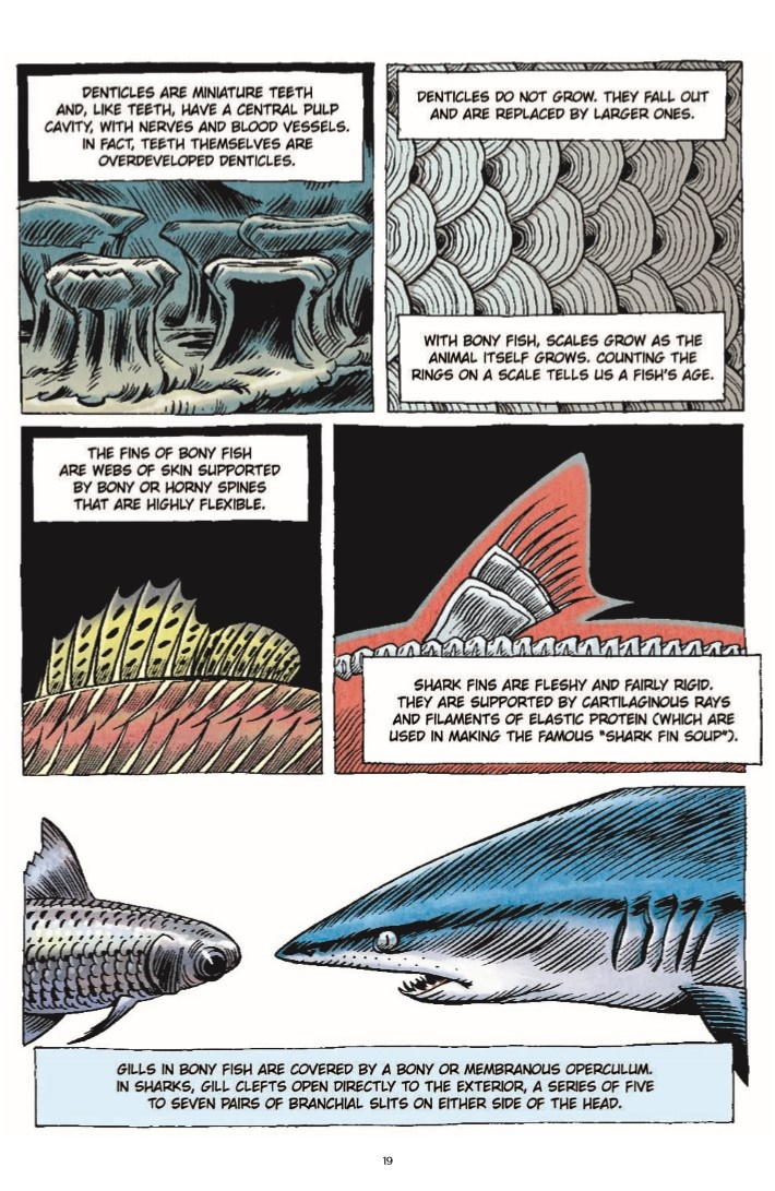 LittleBookOfKnowledge_Shark-pr-8 ComicList Previews: THE LITTLE BOOK OF KNOWLEDGE SHARKS HC