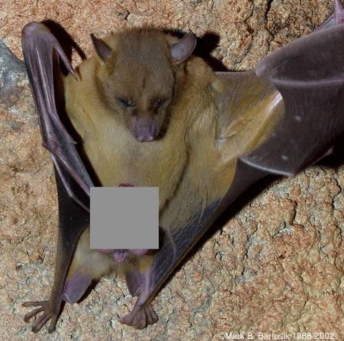big-bat_grey.jpg