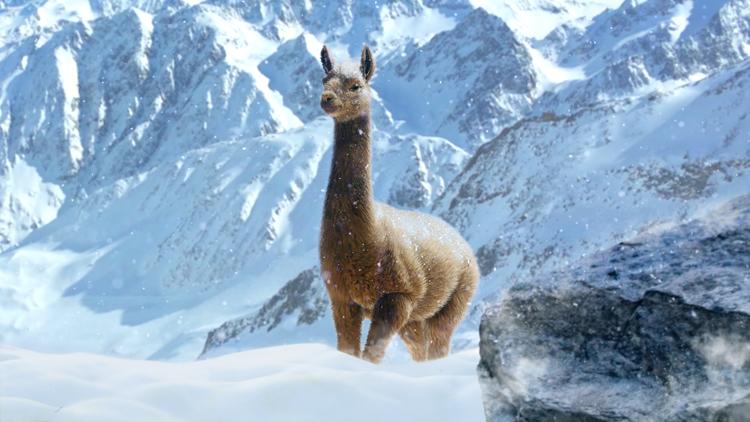 JC4_Llama_In_Alpine_Nov8th_2pm_GMT Screen