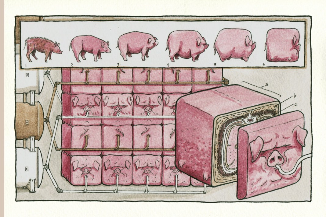 "The 'square pig"" page from Kate Lacour's Vivisectionary"