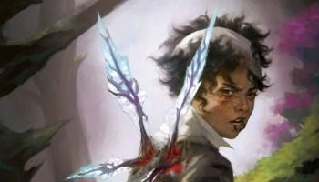 Sparrowhawk review