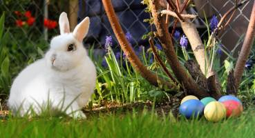 Frohe Ostern! 10