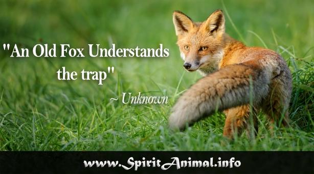 fox quotes spirit animal info