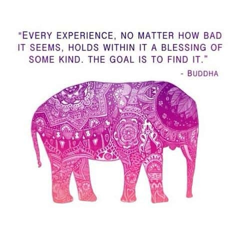 104 legendary elephant quotes that make you think bayart