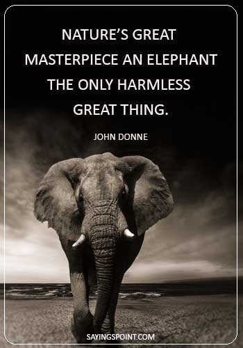 54 beautiful elephant quotes and sayings sayings point