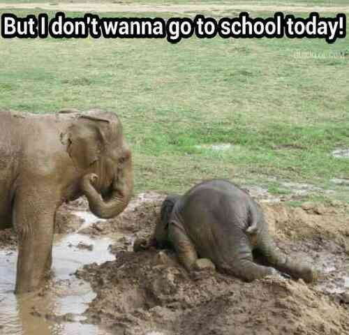 cute elephant quote quote number 616768 picture quotes