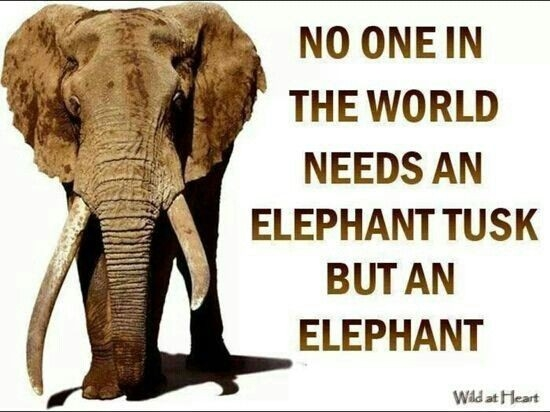 elephant quote quote number 616770 picture quotes