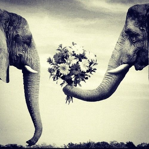 elephant quotes tumblr google search image 1076916