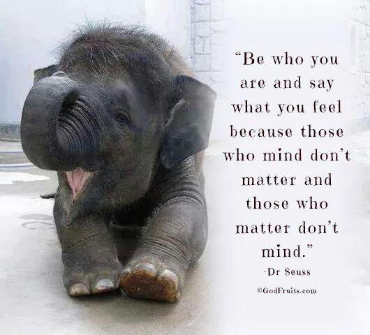 funniest elephant quotes elephant quotes elephant animal