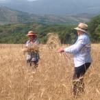 campo-di-grano-signore