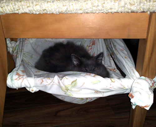 cat hammock under chair camouflage recliner chairs free easy bed diy commatose ca two cats