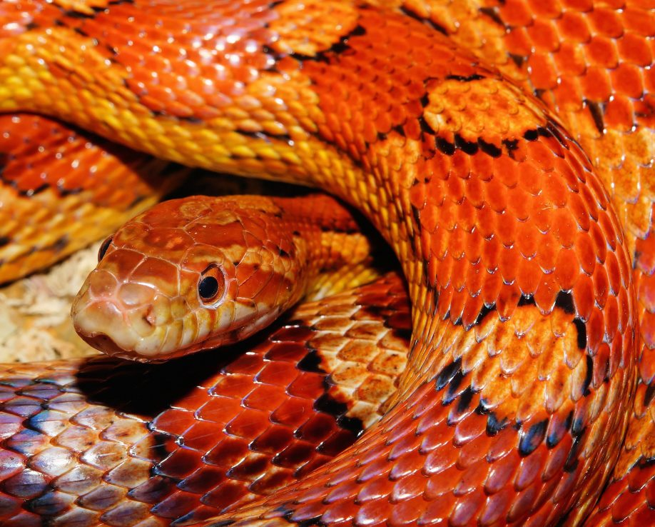 snake in the garden