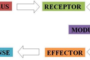 what is Stimulus Response Model