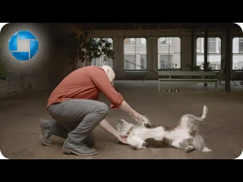 Dog Training | Chase Mastery Commercial Song
