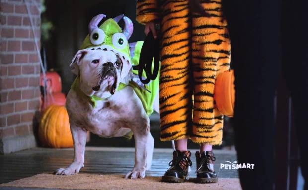 PetSmart Halloween Weekend Sale Commercial Song