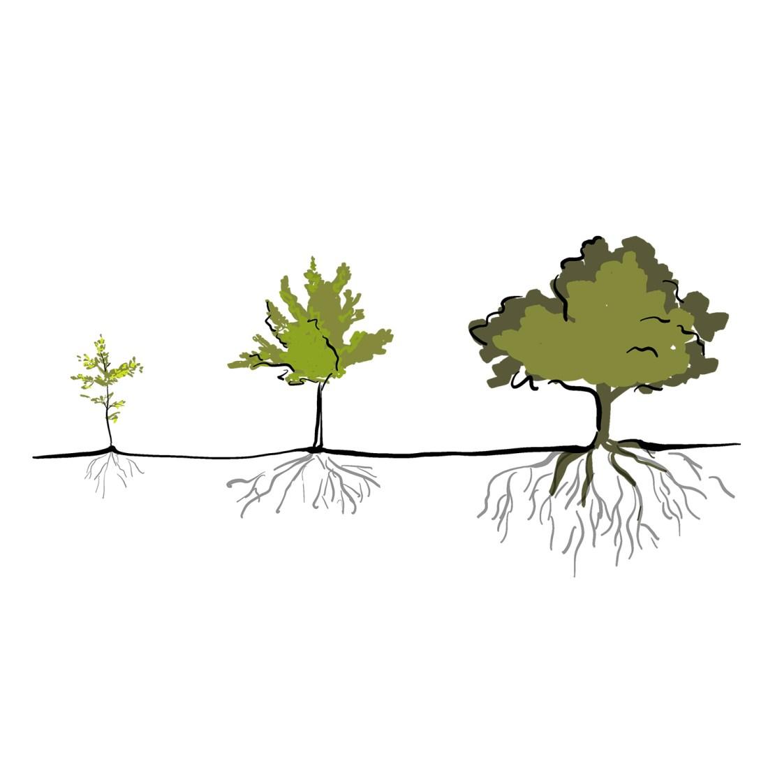 Bäume Entwicklung Führungskräfte Personalentwicklung commma