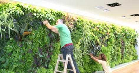Indoor Vertical Garden Ideas For Residential Apartments In India
