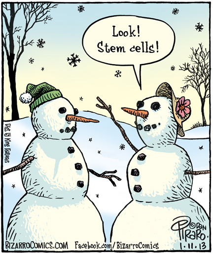Look! Stem Cells!