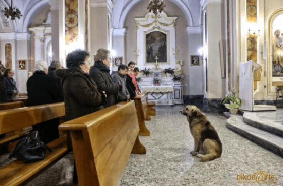 Loyal Dog Ciccio