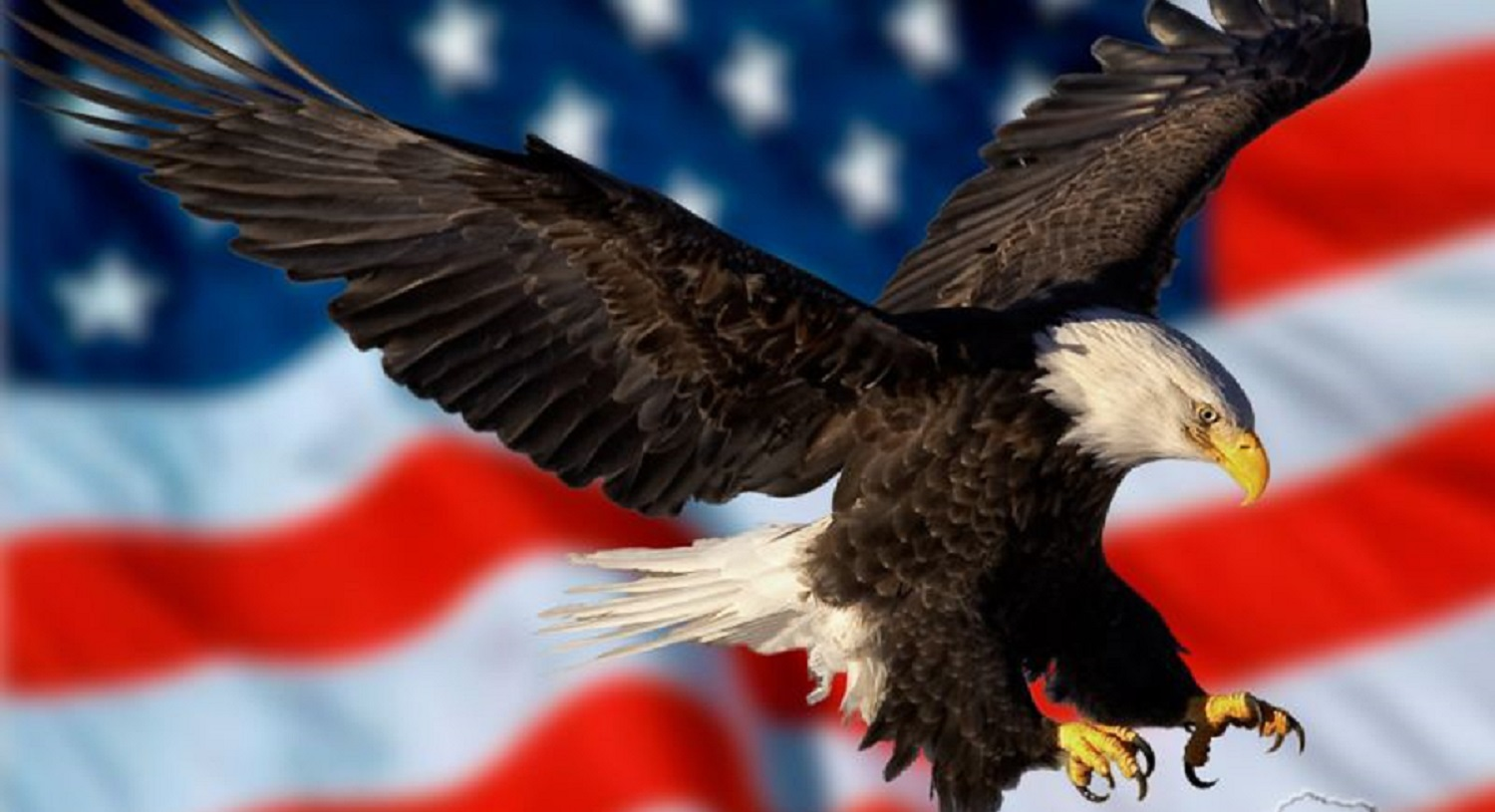 wallpaper of the day: eagle and flag - common sense evaluation
