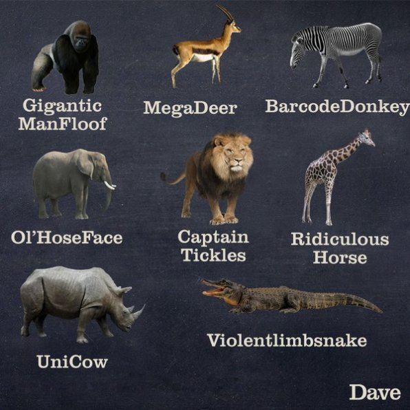 Better Names For Animals