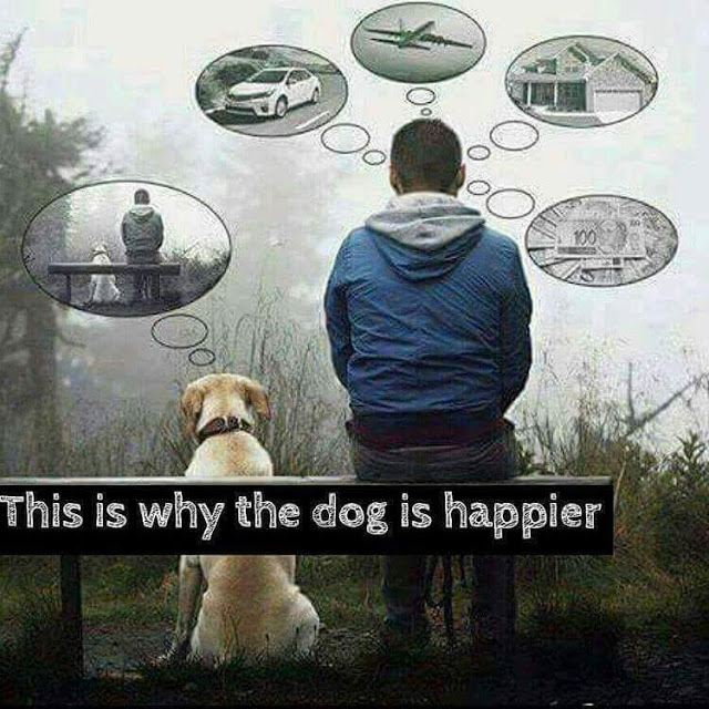 Why Dogs Are Happy