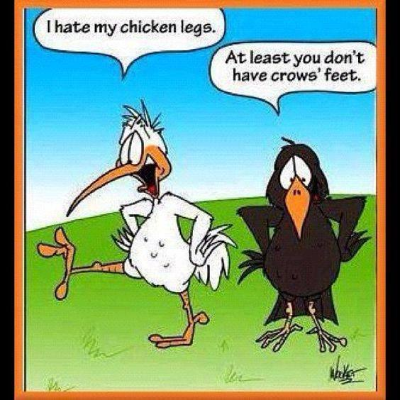Cartoon Of The Day: Bird Legs