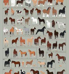 horses archives common sense evaluation horse color diagram horse breed diagram [ 1728 x 2592 Pixel ]