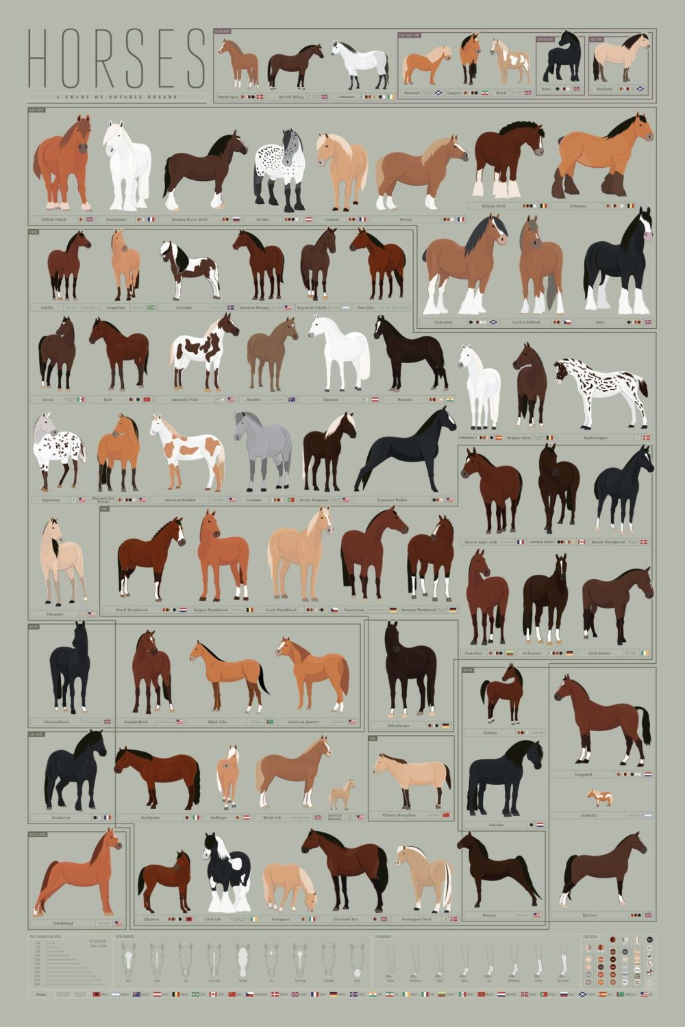 medium resolution of horses archives common sense evaluation horse color diagram horse breed diagram