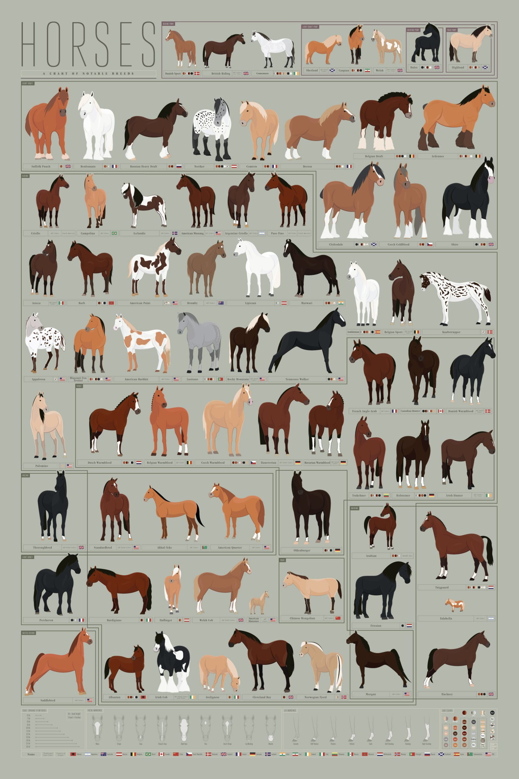 hight resolution of horses archives common sense evaluation horse color diagram horse breed diagram