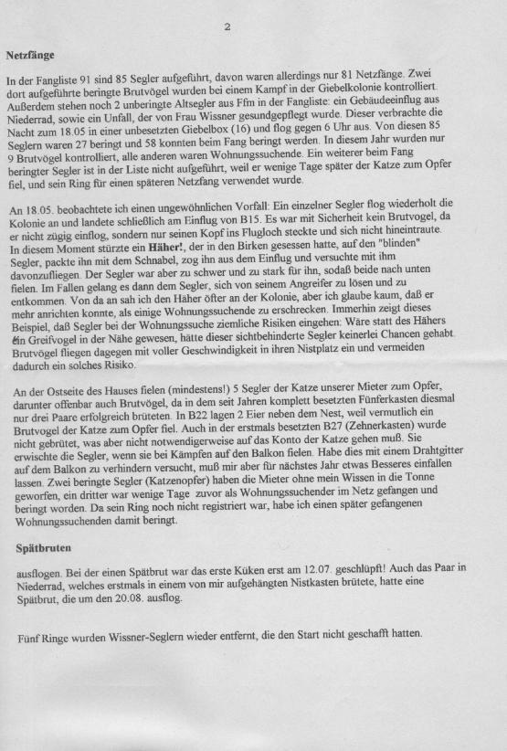 Commonswift, Mauersegler, Apus apus, Martinet noir