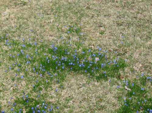 A sky blue lawn
