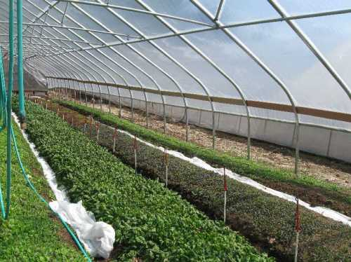 One of six solar greenhouses