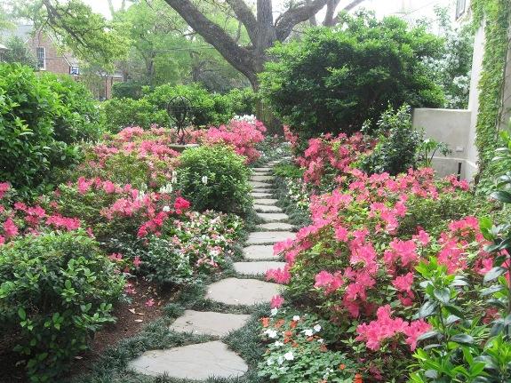 houston rhodies - Houston Garden
