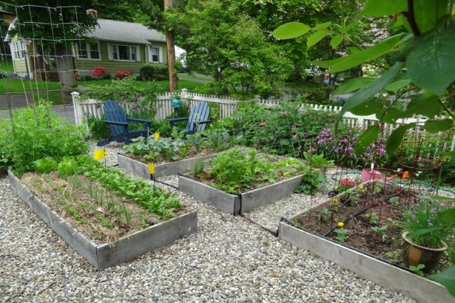 Forbes Library Garden Tour - Raised vegetable beds