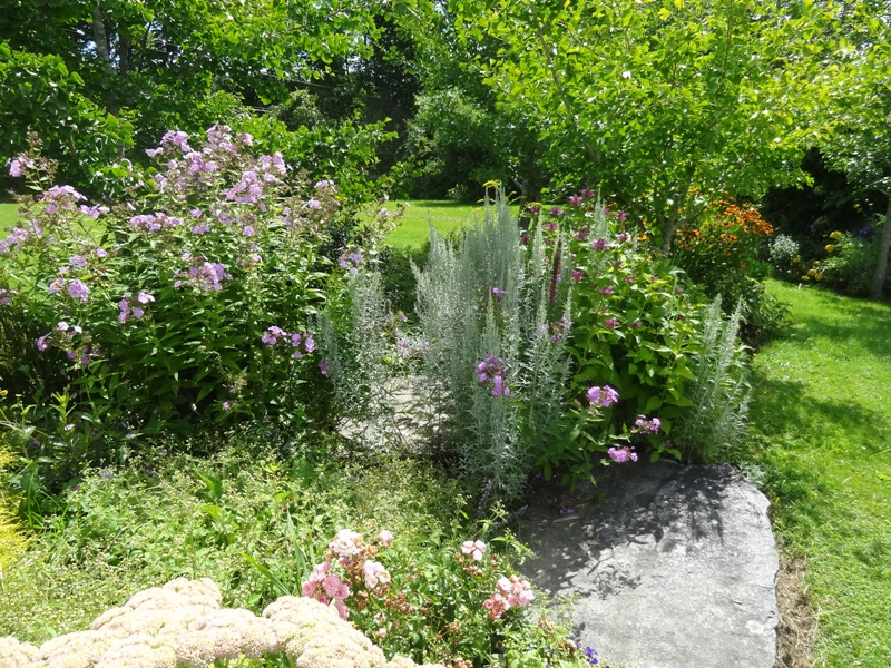 Garden phlox and more