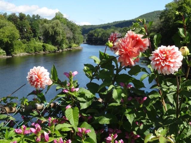 Dahlias on the Bridge of Flowers