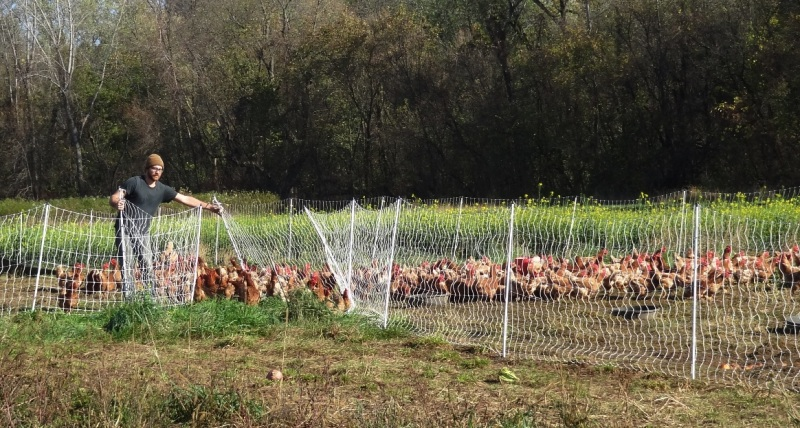 Ben and his chickens at the Intervale Center