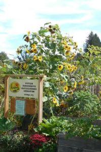 Master Gardener garden plot