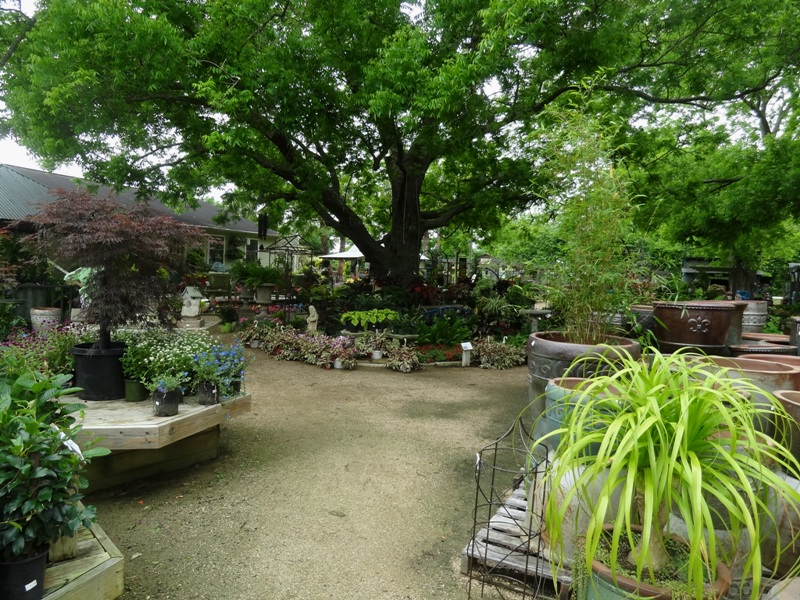Enchanted Forest nursery