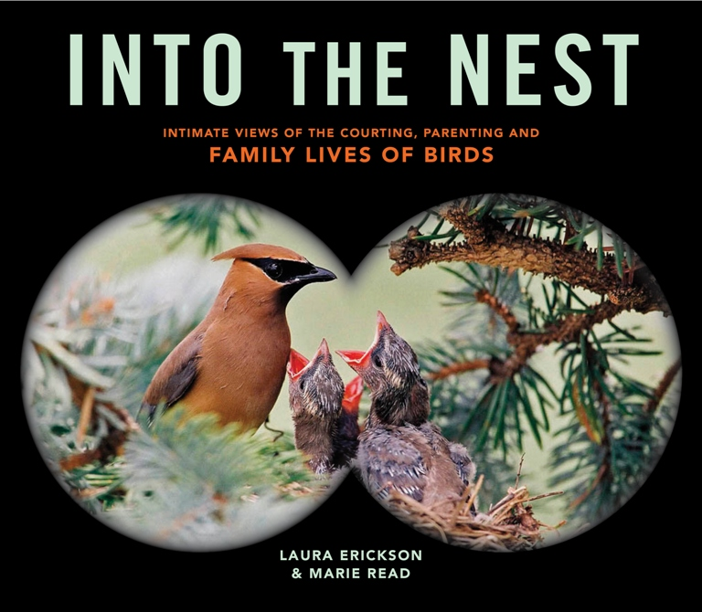 Into the Nest by and Maria Read