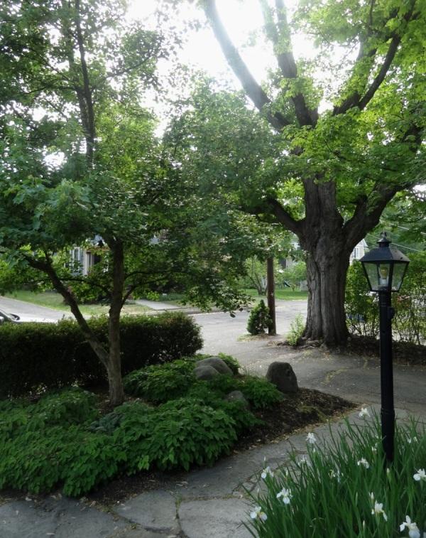 Entry garden in Northampton