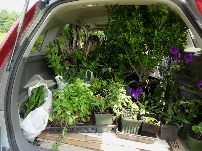 Carload of plants