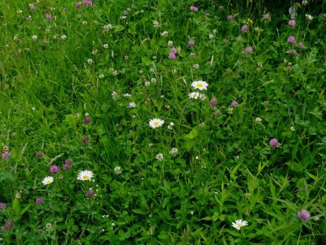 Flowery Mead
