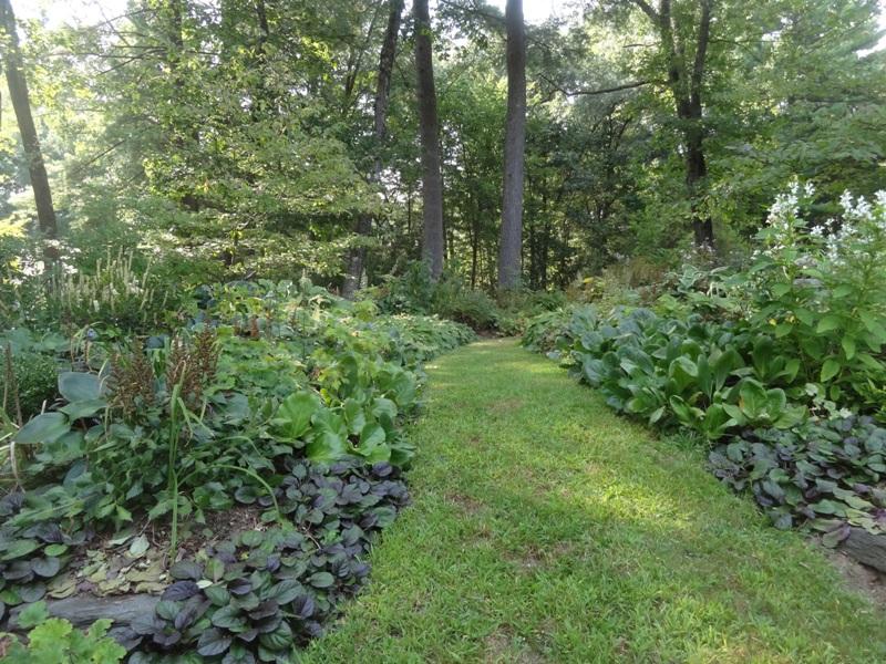 Shade Garden Path