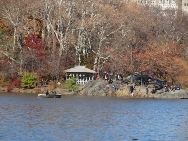 Central Park Trees and Lake