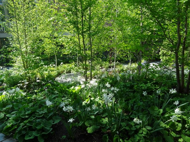 Trees in Monk's Garden