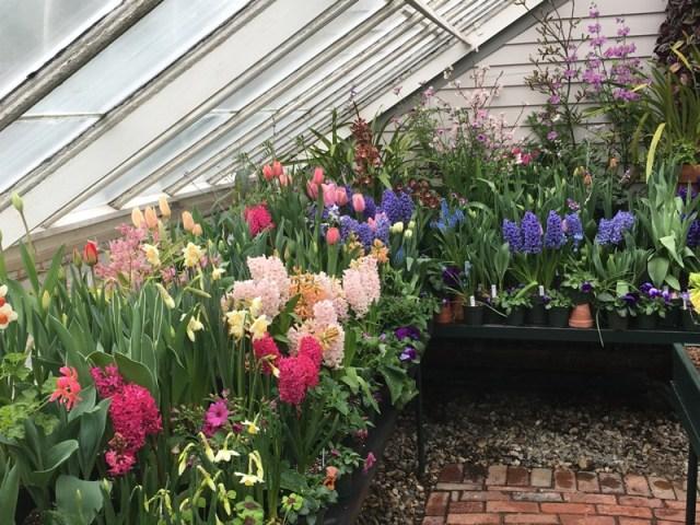 Mt Holyoke Spring Flower Show